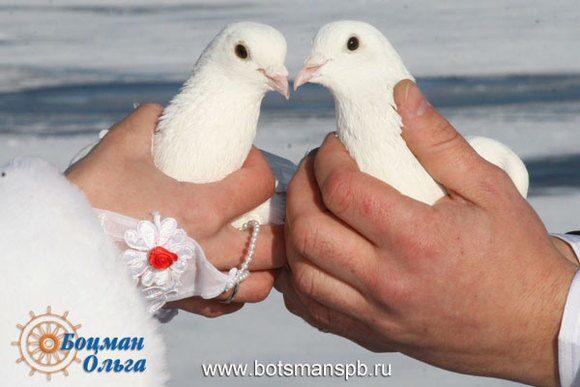 Свадебный фотограф с петербург